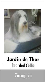 Jardin de Thor Bearded