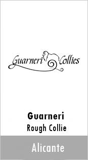 Guarneri