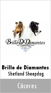 Brillo de Diamante