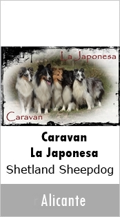 Caravan - La Japonesa